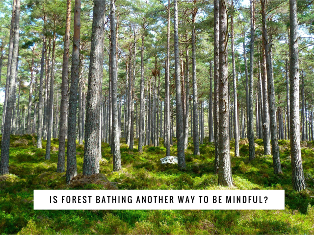 Is Forest Bathing Another Way to be Mindful